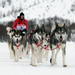 One of the world�s most difficult dog sledding races