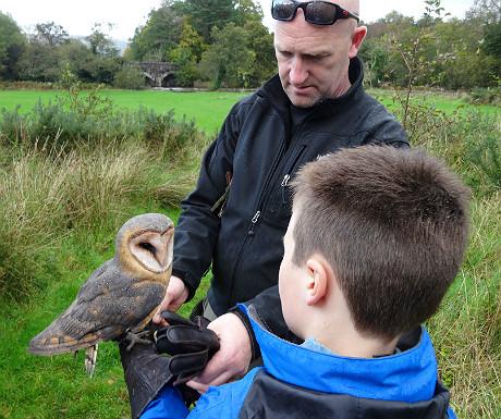 Sheen Falls owl