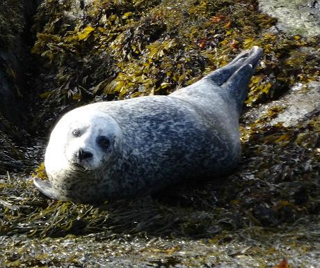 Sheen Falls seal
