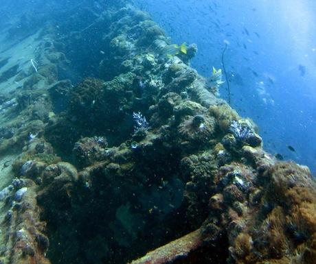 5 - SS Yongola