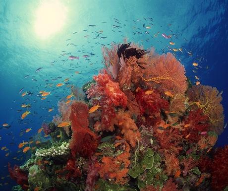 Corals on Richelieu Rock, Thailand