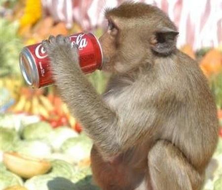 Monkey Buffet Lopburi