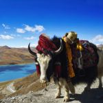 Top 10 things to do in Tibet