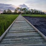 Photograph of the week: Hunting Island's salt marsh at sunset