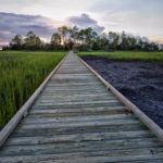 Photograph of the week: Hunting Island's salt marsh at sunset