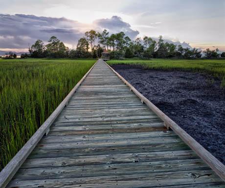 Hunting Island salt marsh