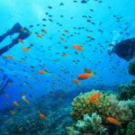 3 of Thailand's top dive sites