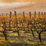 6 great wine regions in Australia