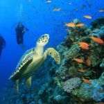 5 great places for snorkelling and diving in the Western Caribbean
