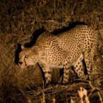 Top 5 night safaris in Africa