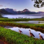 Photograph of the week: Sunrise in Hawaii