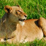 Affordable luxury safaris in South Africa