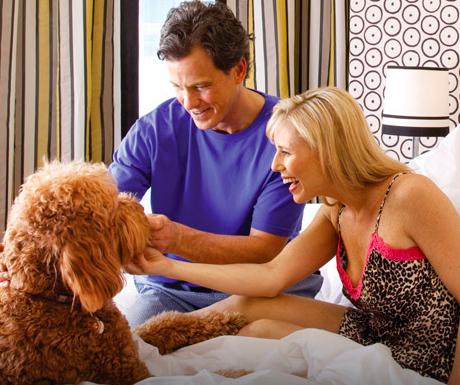 Kimpton Luxury Hotels Pet Friendly