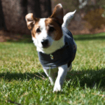 Top luxury travel essentials for pets