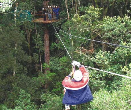 Treetop tour