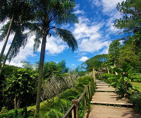 Garden of the Sleeping Giant, Fiji