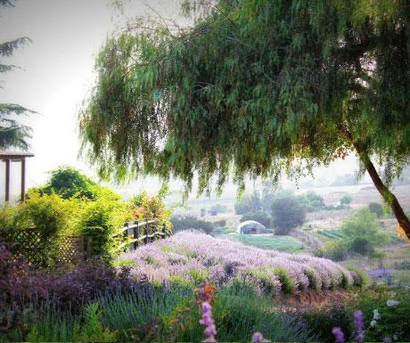Keys Creek Lavender Farm
