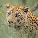 Is the Okavango the best luxury safari location?