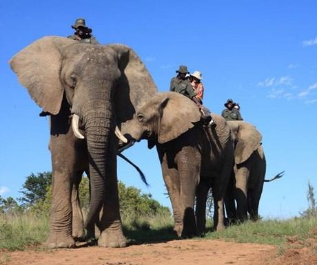 Addo elephant back safari