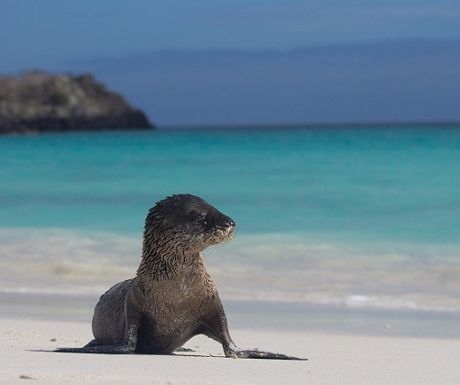 Galapagos Islands of Ecuador