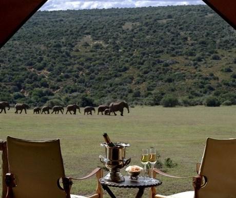 Gorah Elephant Camp - deck and elephants