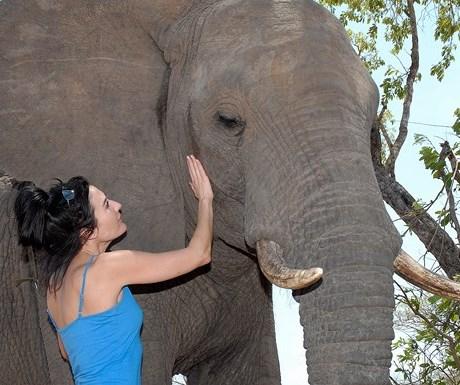 Manyatta Rock Camp - elephant interaction