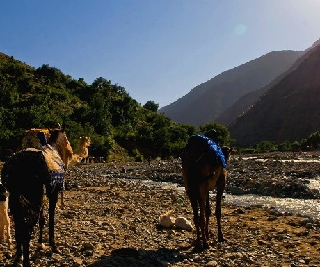 Camel ride, Atlas Mountains