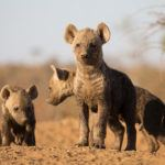 Top times to see Africa's baby wildlife