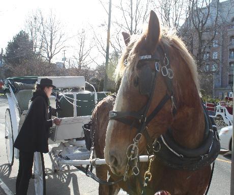 Victoria horse-drawn carriage