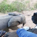 3 reasons an elephant back safari is a must