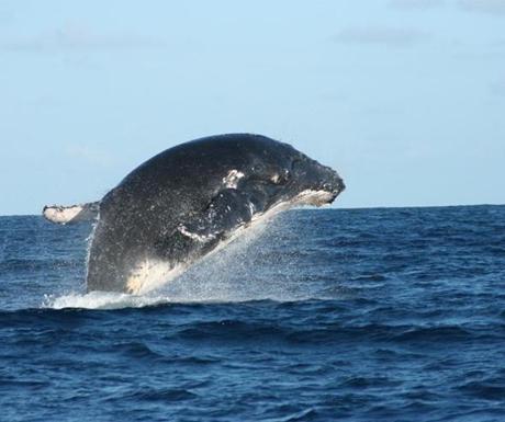 Vamizi Island whale