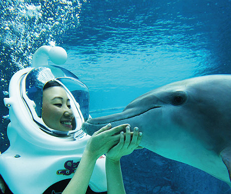 Dolphin Experience at Resorts World Sentosa