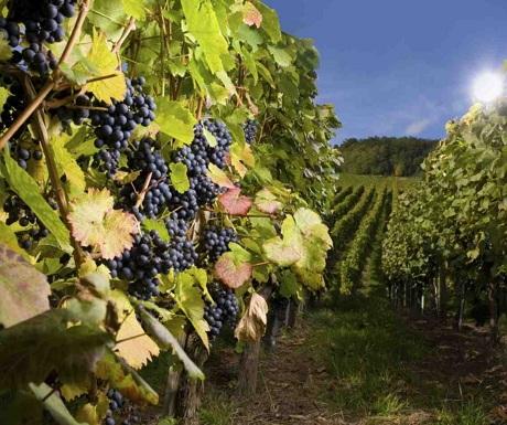 Algodon Wine Estates, San Rafael