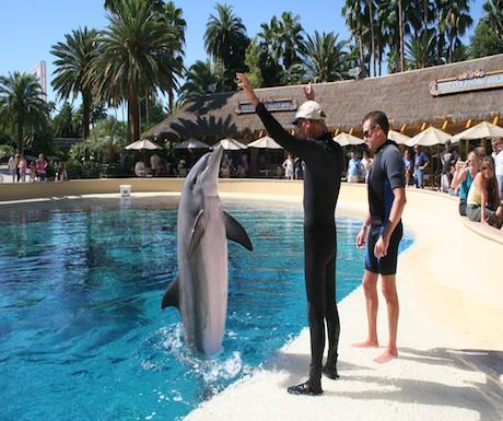 Las Vegas dolphin training
