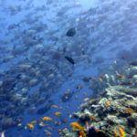 Vamizi Private Island's 'Big 5'