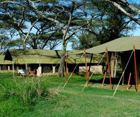Serengeti Savannah Camp
