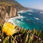 The coast of California: a magnificent seven
