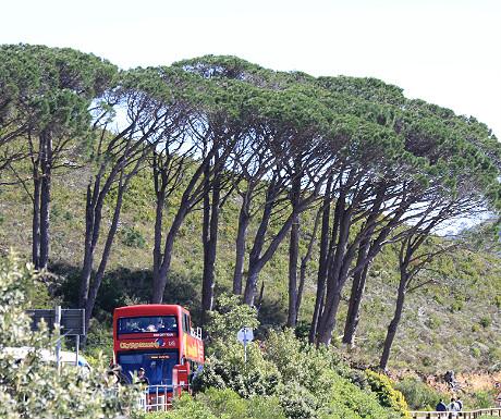 Cape Town tourist bus