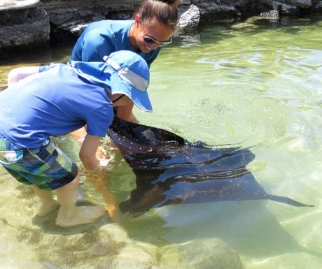 Four Seasons Hualalai - feeding eagle ray at Kings Pond