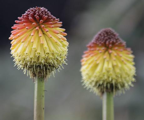 Kirstenbosch Botanical Garden close-up