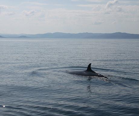 Whale off Eigg
