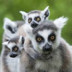 7 secret safari experiences in Africa