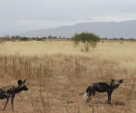 Manyara Ranch