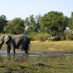Luxury Botswana for families