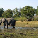 Luxury Botswana for families