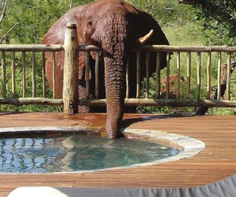 Shamwari - Private Game Reserve - Luxury Safari Experience