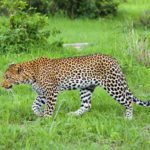 3 amazing safari and beach holidays