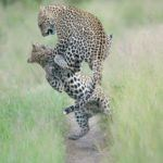 5 of South Africa's best private game reserves