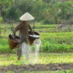 Vietnam - a journey by book