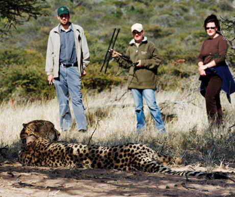Walk with cheetah
